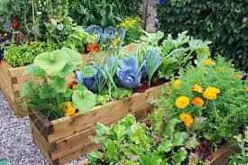 easy vegetable garden ideas with garden raised beds for low