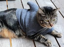 Dog Shark Halloween Costume 7 Hilarious Cat Costumes Halloween Dog Cat Pet