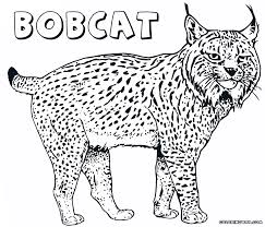 canada lynx coloring page kids coloring