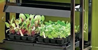 best grow lights for vegetables best indoor garden lights indoor grow lights indoor outdoor led