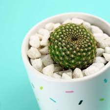 i u0027m so on trend cactus flower pot by paper plane