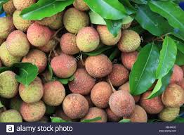 lychee fruit peeled lychee fruits litchi chinensis stock photos u0026 lychee fruits litchi