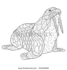 coloring page for walrus adult coloring page walrus art style stock vector hd royalty free