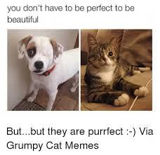 Memes Of Grumpy Cat - 25 best memes about grumpy cat meme grumpy cat memes