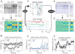 An Information Maximization Approach To Blind Separation And Blind Deconvolution Specific Local Field Potentials Reflect Discrete