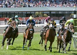 golden gate offers thanksgiving day racing post 11 15am