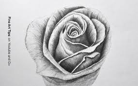 flower drawings with pencil how to draw a rose44 pencil drawings