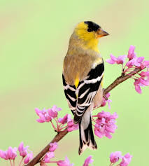 how to attract your favorite birds to the garden