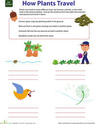 2nd grade science worksheets u0026 free printables page 3 education com