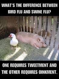 Meme Pun - difference between bird flu and swine flu pun memes