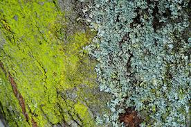 mold and moss on a tree trunk stock images image 30102154