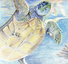 myrtle the turtle home facebook