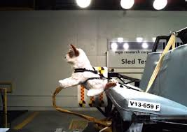 pet crash test results how subaru helps keep our furry friends