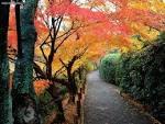 Autumn Colors Kyoto Japan