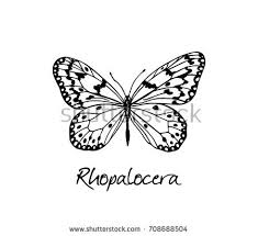 white butterfly vector free vector stock graphics