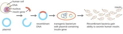 microbes and the tools of genetic engineering microbiology