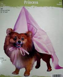 small dog witch costume halloween costumes and more pet costumes