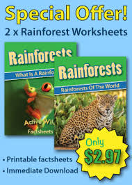 rainforest facts for kids the ultimate guide