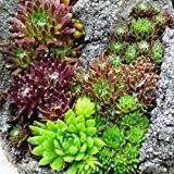 pflanzen für steingärten bei gartencenter de