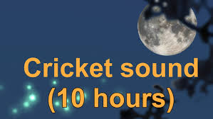 Crickets Chirping Meme - cricket sound 10 hours youtube