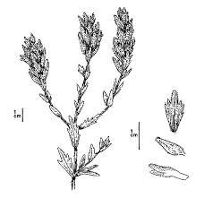 implantation lavender flower coloring pages implantation lavender