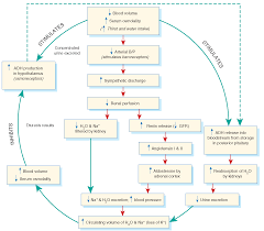 Endocrine System Concept Map Fluid And Electrolyte Balance Structure And Function Nursing