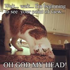 Stupid Cat Meme - stupid hurts stupid lolcats lol cat memes funny cats