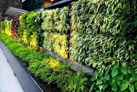 vertical garden company delhi india green walls vertical garden
