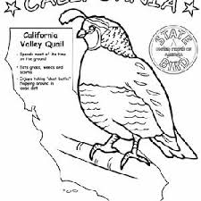 pennsylvania state bird coloring page coloring pages ideas