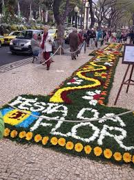 Madeira Flowers - 231 best visit madeira images on pinterest wood portugal and