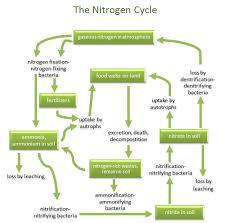 nitrogen cycle related keywords u0026 suggestions nitrogen cycle