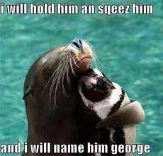 Cute Penguin Meme - post 14829 justpost virtually entertaining