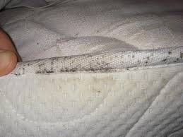 Mattress Cover Bed Bugs Bed Bug Mattress Cover Is The Best Defense For Preventing Bed Bugs