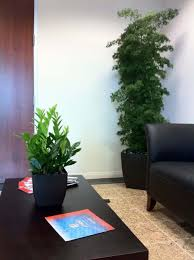 easy indoor plants living room with black furniture and houseplants zamioculcas