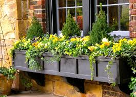 Flower Boxes That Thrive In by Best 25 Window Box Flowers Ideas On Pinterest Window Boxes