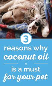 3 reasons why coconut oil is a must for your pet thegoodstuff