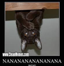 Bat Meme - bat cat clean memes