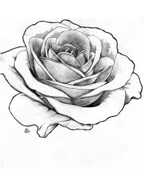 rose outline drawing roses drawings outlines bouquet idea
