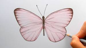 timelapse drawing a light pink butterfly with colored pencils