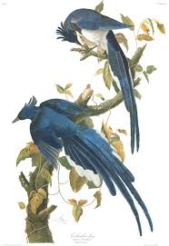 all of audubon u0027s u0027birds of america u0027 in one high resolution flock