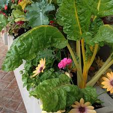 Small Vegetable Garden Ideas Small Vegetable Garden Small Vegetable Garden Ideas