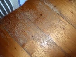 Powder Post Beetles In Hardwood Floors - termites borers u0026 white ants information tanzer pest control