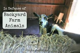 in defense of backyard farm animals they u0027re not our goats