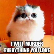 Cute Kitten Memes - cute kitten plot fun cat pictures