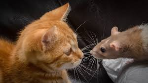 whiskers tag wallpapers page 2 animals fur color love vegetation