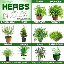 herb growing chart how to plant a herb garden outside herb garden companion planting