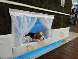 The Ultimate Bunk Bed For Pampered Pets Daily Mail Online - Small bunk bed mattress