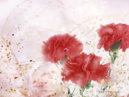 carnation wallpapers wallpaper cave