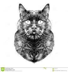 cat face sketch vector stock vector image 91503619