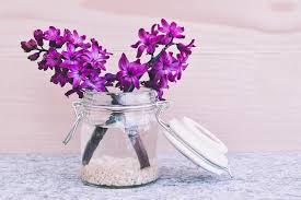 Hyacinth Flower Free Photo Hyacinth Flower Blossom Bloom Free Image On